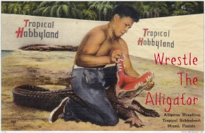 wrestle the alligator1